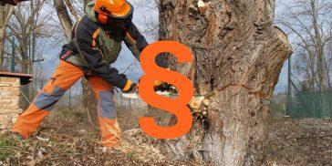 Právní úprava kácení stromů
